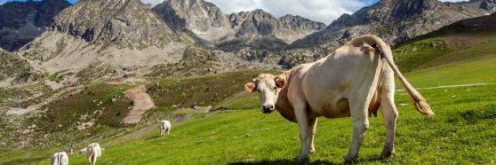 ¡Escapada por las montañas de Andorra!
